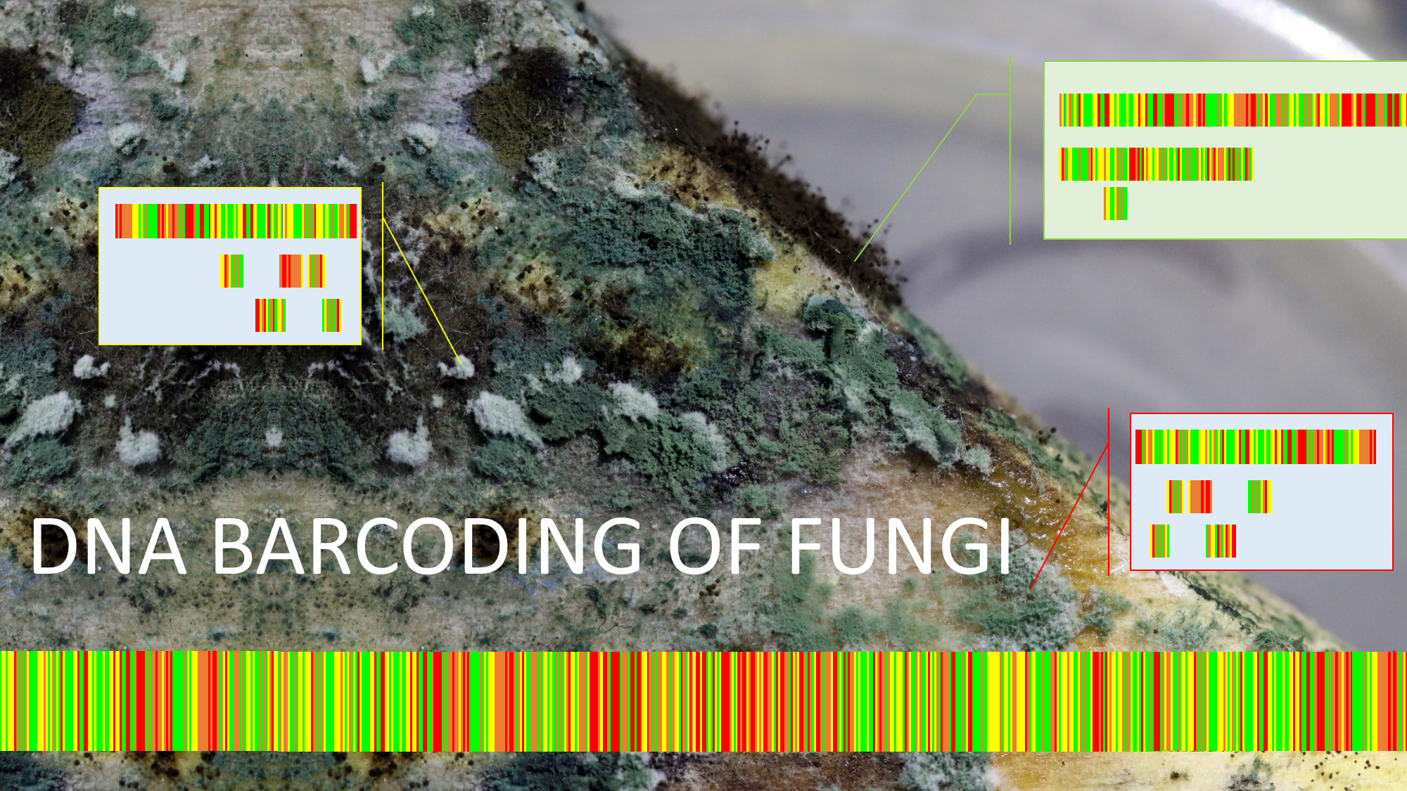 DNA Barcoding in FungiG cut