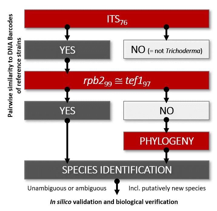 Protocol for molecular identification of Trichoderma